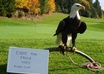 take a picture of my bald eagle, Eddie, with your message small2