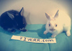 take pictures of my sweet bunnies with your message, logo or picture only small2