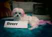let my Pink Maltese Dog jump through a Pink hoop with your personalized message small2