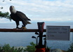 take a picture of my bald eagle, Eddie, with your message small3
