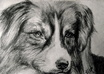 draw your pet portrait on paper with charcoal and pencil and will send it to you by mail, not digital small3