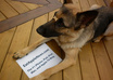 take incredible pictures of my dog holding your message, website, logo, fan sign or whatever you like small3