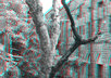 turn your photo into 3D with help anaglyph glass small1