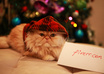take a photo of my male persian cat with your message small1
