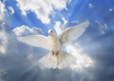 provide you with a genuine caring and intuitive holy SPIRITS reading with incredible accuracy and detail