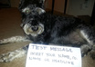take a picture of my mini schnauzer dog with your message small1