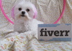 let my Pink Maltese Dog jump through a Pink hoop with your personalized message small1