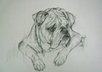 draw a cute picture of your pet