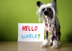 take a picture of the cutest Chinese Crested with your message