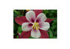 send a beautiful flower postcard to you small1