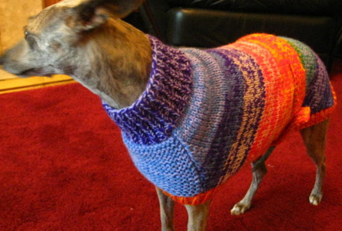 Knitting Pattern For Whippet Coat : send you my Whippet Coat knitting pattern - fiverr